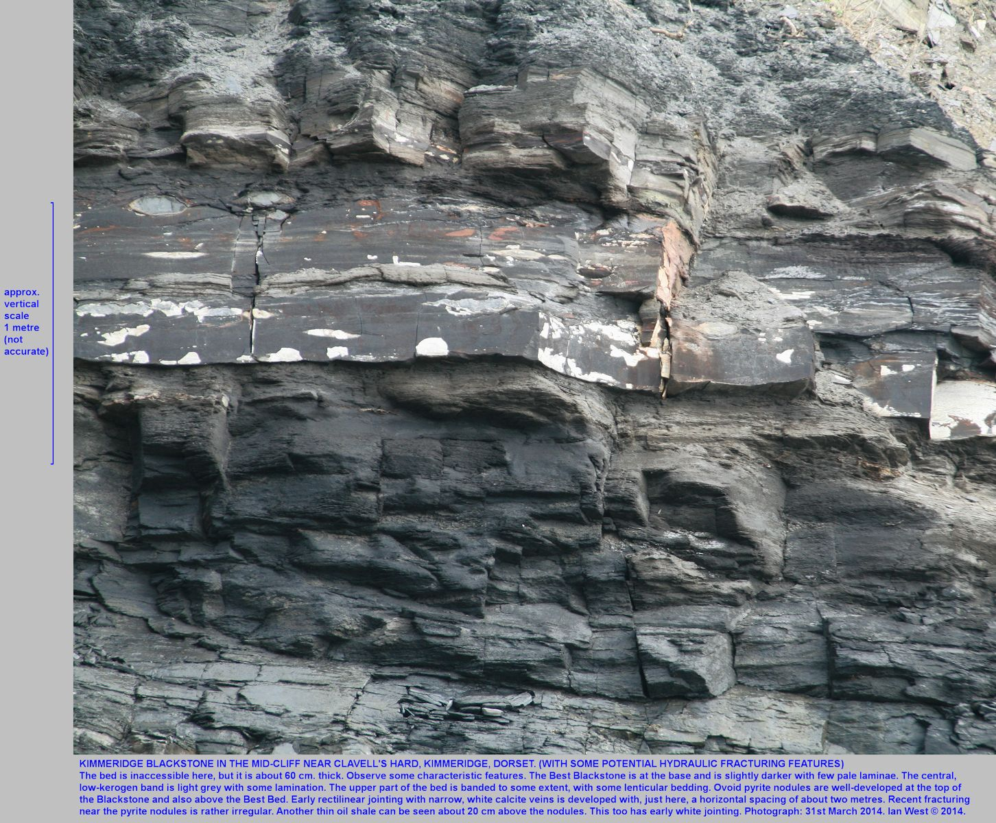 The Kimmeridge Blackstone or oil shale bed in the mid-cliff, near Clavell's Hard, Kimmeridge, Dorset, showing fracture pattern and possible hydraulic fracturing potential