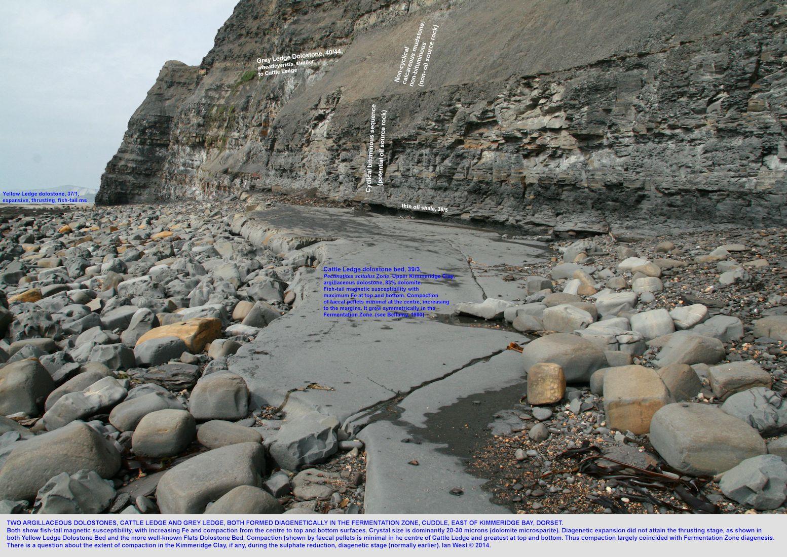 Fermentation diagenesis, ferroan dolostones (dolomites), Cattle Ledge and Grey Ledge Stone Bands, Upper Kimmeridge Clay, Cuddle, east of Kimmeridge Bay, Dorset, 31st March 2014