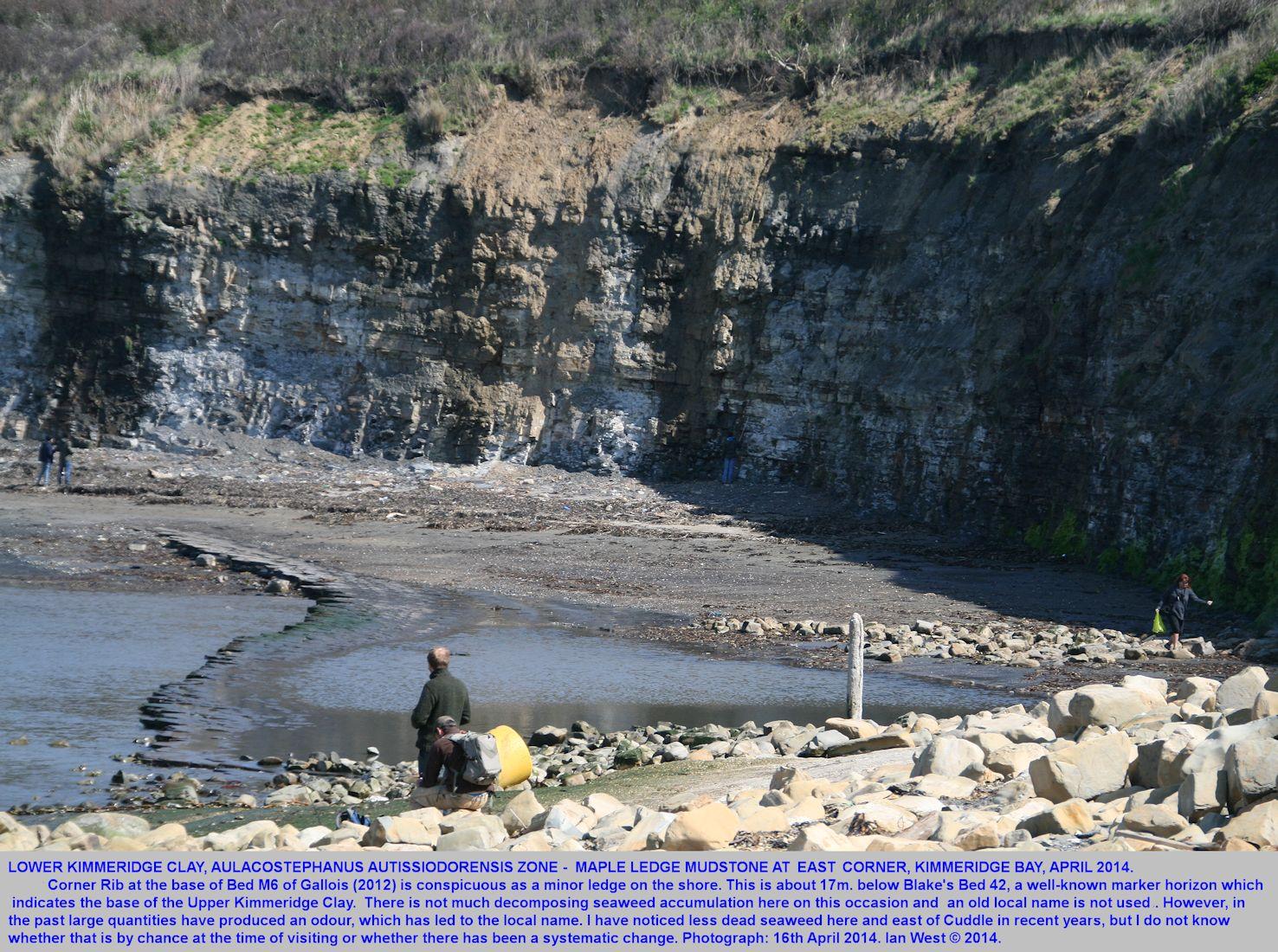 The Maple Ledge Mudstone Member of the Lower Kimmeridge Clay at the eastern corner of Kimmeridge Bay, Dorset, 16th April 2014