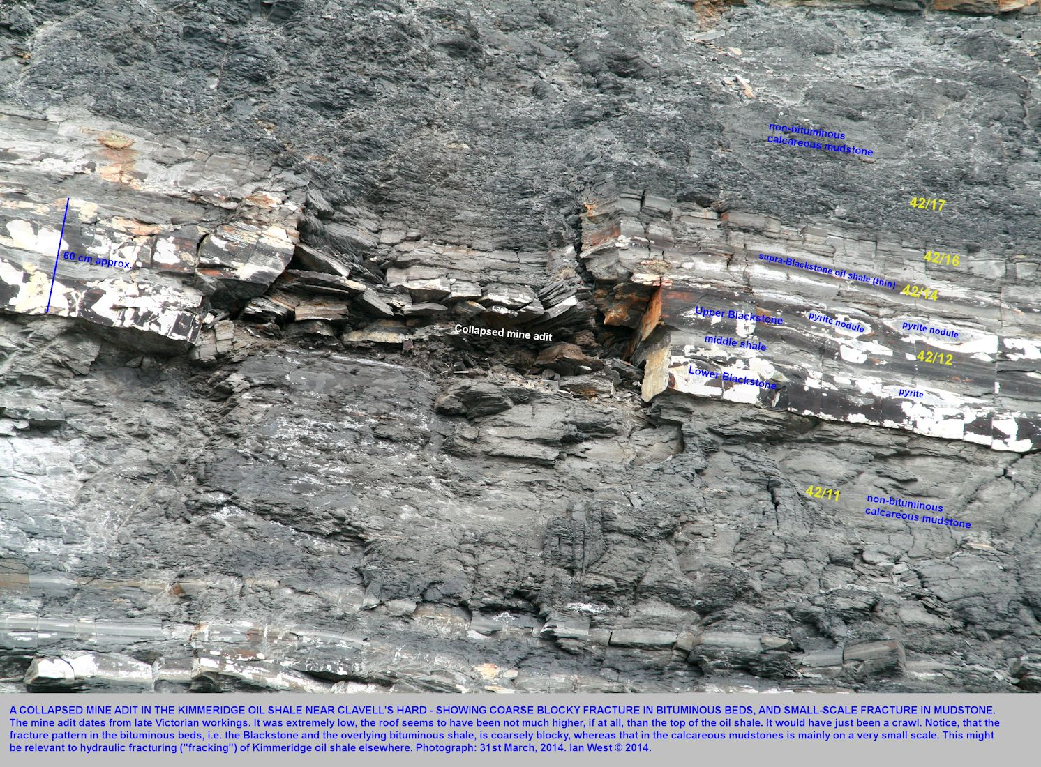 Kimmeridge oil shale, fracture pattern as seen at collapsed mine workings, near Clavell's Hard, east of Kimmeridge Bay, Dorset, 31st March 2014