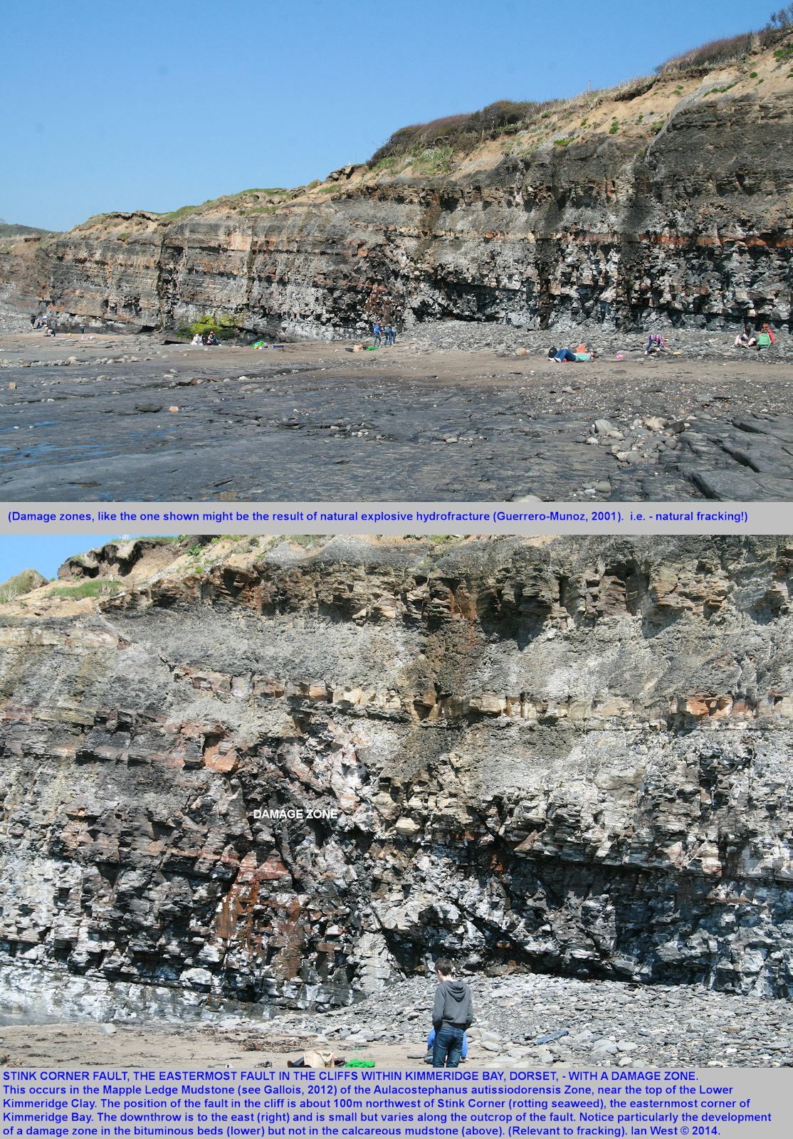 Corner Fault, an extensional fault, with a damage zone, in bituminous shales of the uppermost part, the Autissiodorensis Zone, of the Lower Kimmeridge Bay, Dorset, 1st May 2014