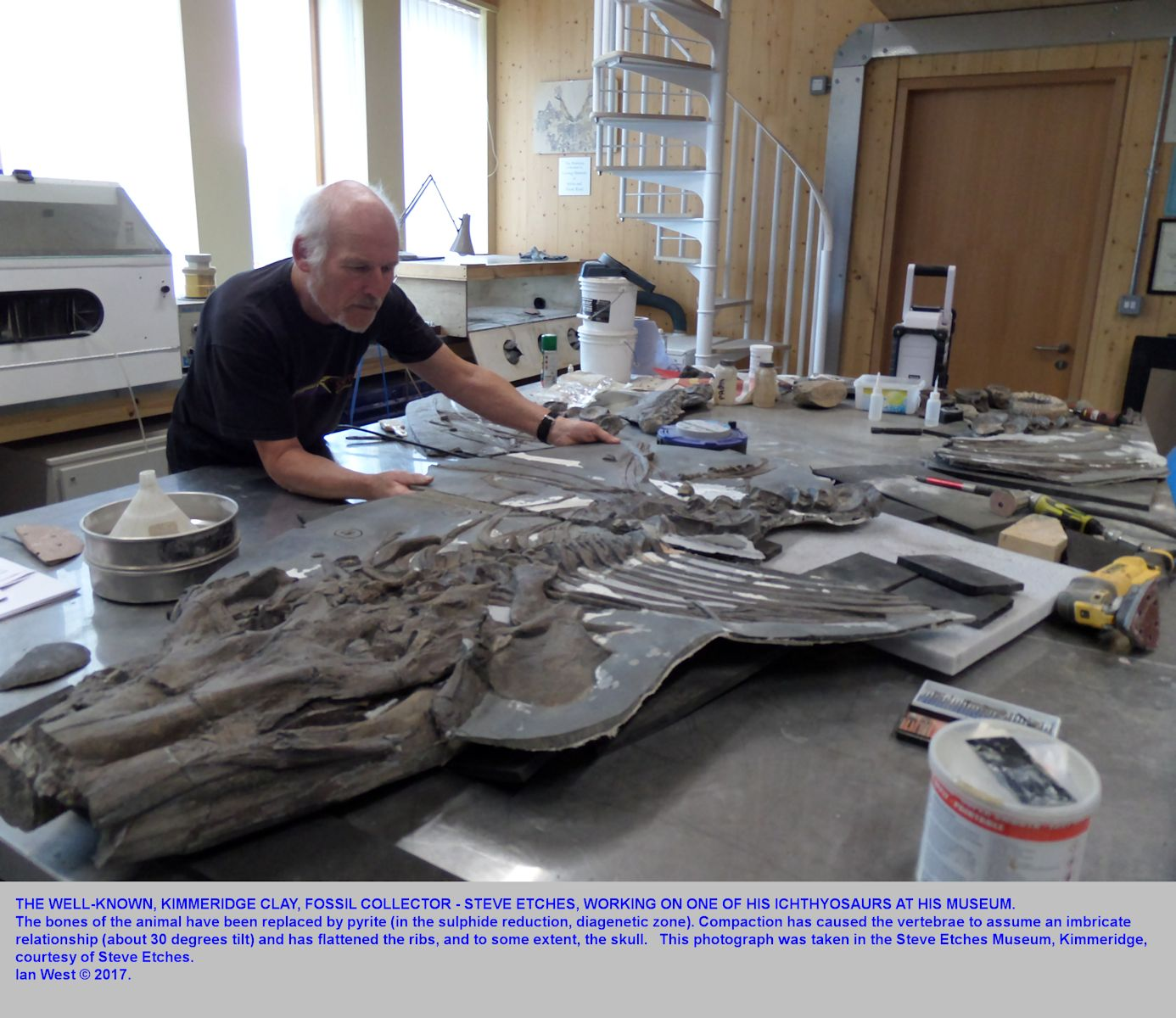 Steve Etches of Kimmeridge, Dorset, positions part of one of his fossil ichthyosaurs, at the Steve Etches Museum at Kimmeridge, 18th September 2017