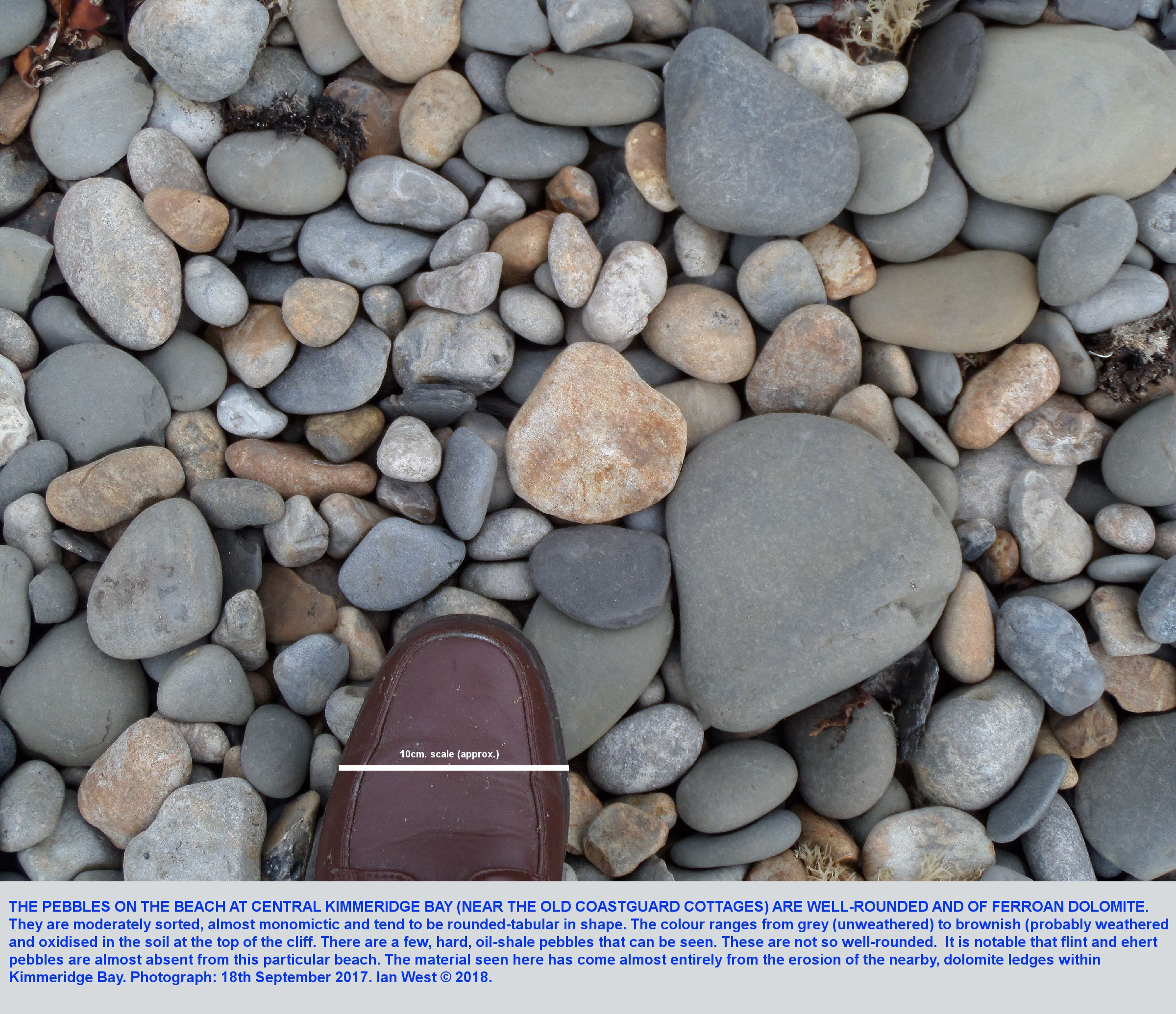 A closer view of beach pebbles of ferroan dolomite at  Kimmeridge Bay, Dorset