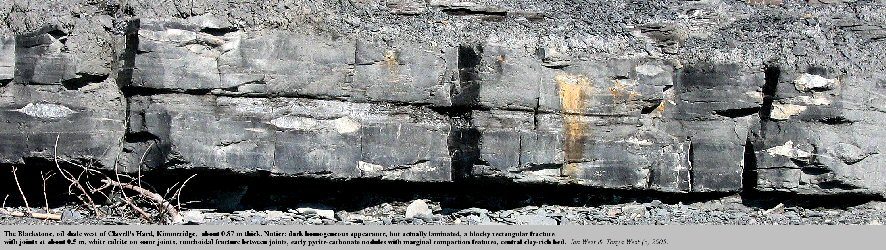 Details of the Blackstone, the oil shale, east of Clavell's Hard, Kimmeridge, Dorset