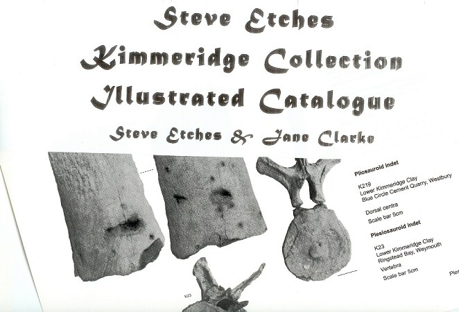 Catalogue of the Steve Etches Kimmeridge Clay collection, Dorset