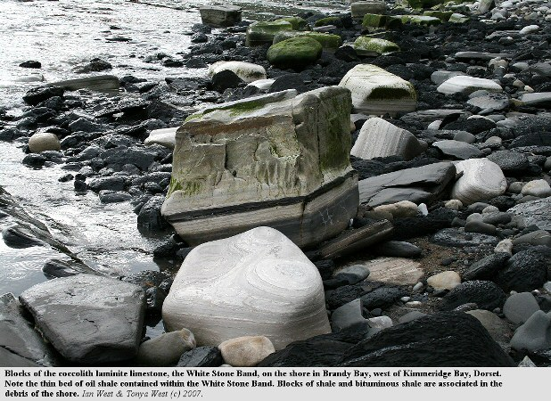 Blocks of the White Stone Band, a coccolith limestone of the Upper Kimmeridge Clay, on the shore at Brandy Bay, west of Kimmeridge Bay, Dorset