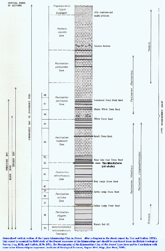 Generalised sequence of the Upper Kimmeridge Clay in Dorset after Cox and Gallois (1981)