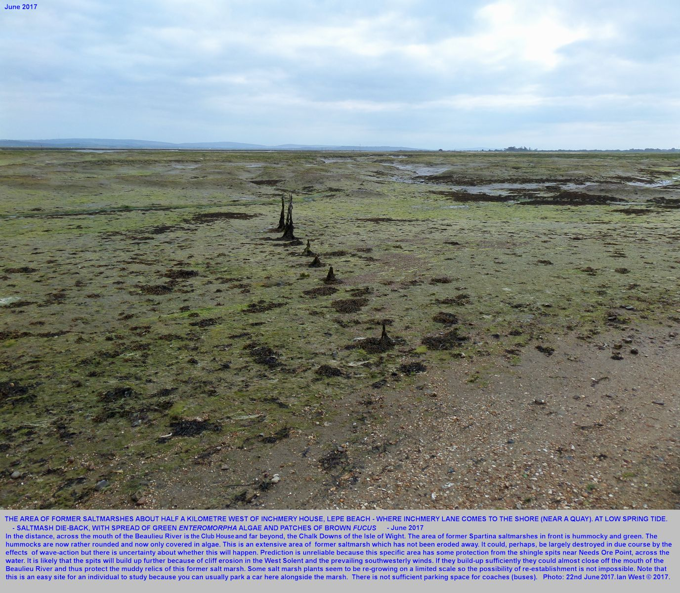 The area of former saltmarshes at the shore, half a kilometre west of Inchmery House, near Lepe Beach, Beaulieu River estuary, Hampshire, seen on the 22nd June 2017, after die-back, degradation and erosion
