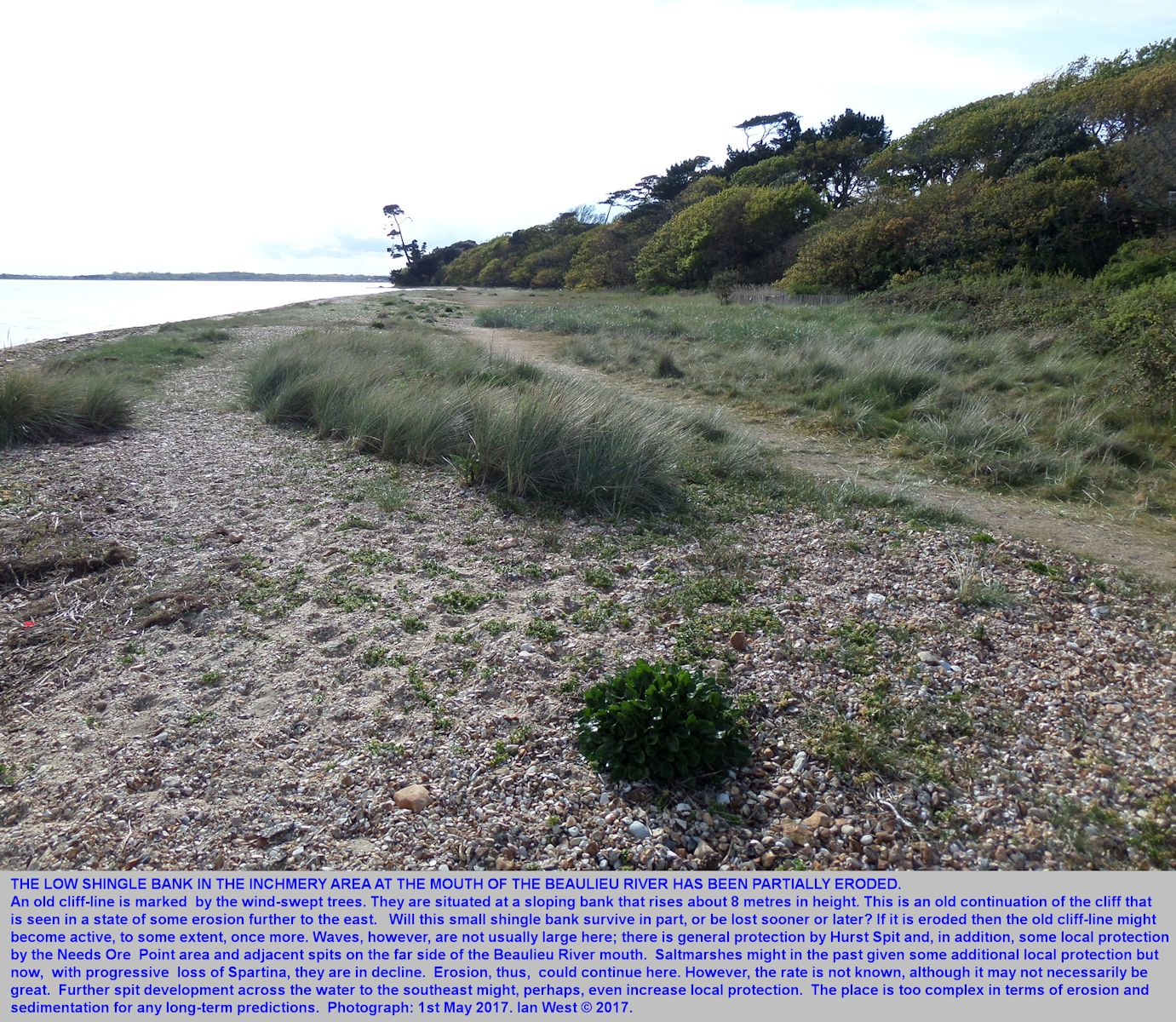 The small shingle bank near Inchmery House, west of Lepe Beach, Hampshire, is being eroded to some extent, photograph 1st May 2017