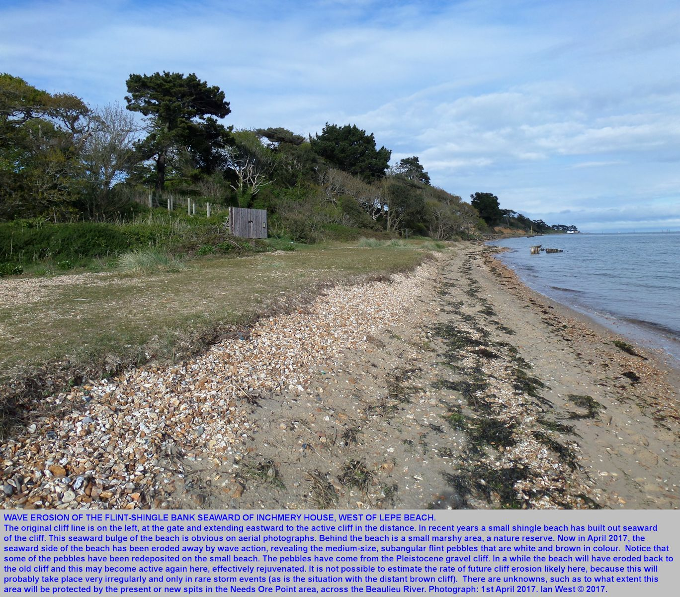 Erosion cuts a miniature cliff and reveals the flint pebbles in the small shingle bank at Inchmery  House, west of Lepe Beach, Hampshire, 1st May 2017
