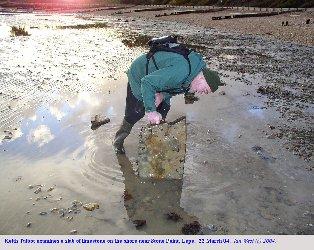 Keith Talbot examines slab on beach, near Stone Point