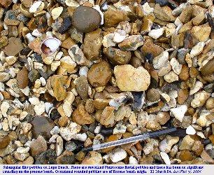 Typical subangular flint pebbles at Lepe Beach, Hampshire