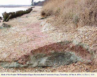Marls of the Headon Hill Formation on the shore at Lepe Beach, Hampshire