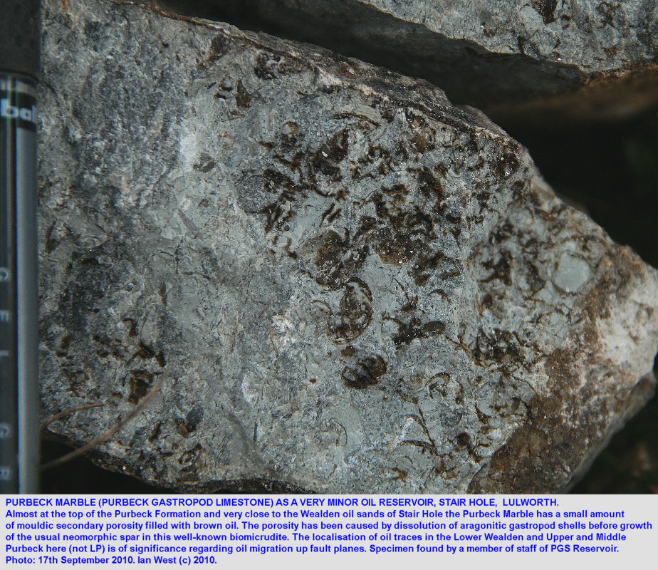 Small quantities of oil in mouldic secondary porosity in Purbeck Marble, Stair Hole, near Lulworth Cove, Dorset, 2010
