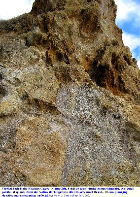 Details of the Wealden Coarse Quartz Grit at the east side of Lulworth Cove, Dorset, in 2004.