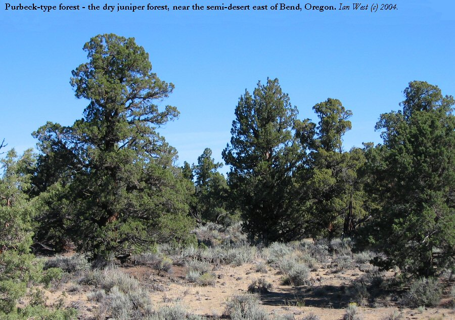 Cutting Down Desert Junipers To Save Precious Water