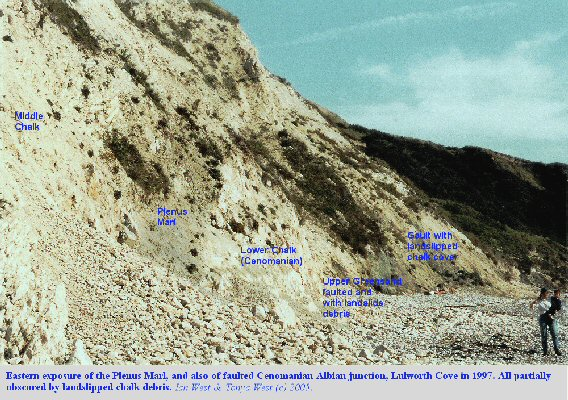 The Plenus Marl  at the top of the Lower Chalk, seen in the eastern outcrop of the back of Lulworth Cove, Dorset, England, 1997