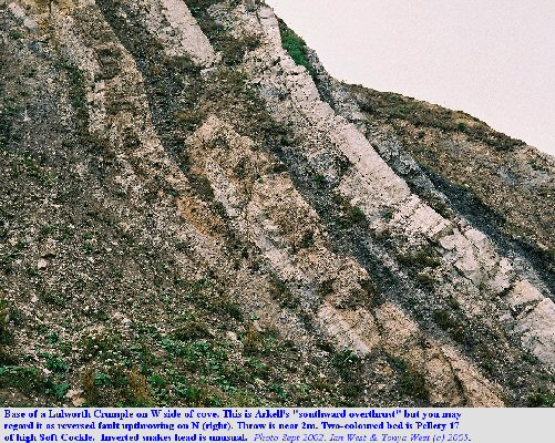Part of a Lulworth Crumple at the west side of Lulworth Cove, Dorset, with the light brown Pellety Bed