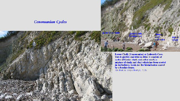 Cenomanian cycles in the Lower Chalk at Lulworth Cove, Dorset, England