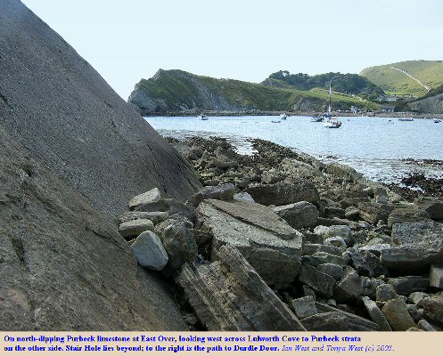 North-dipping Purbeck limestones at East Over, with view across Lulworth Cove, Dorset to the west side