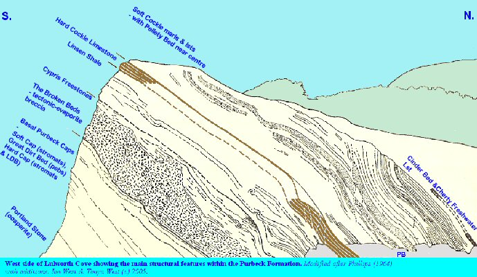 Diagram of structures in the Purbeck strata of the west side of Lulworth Cove, Dorset