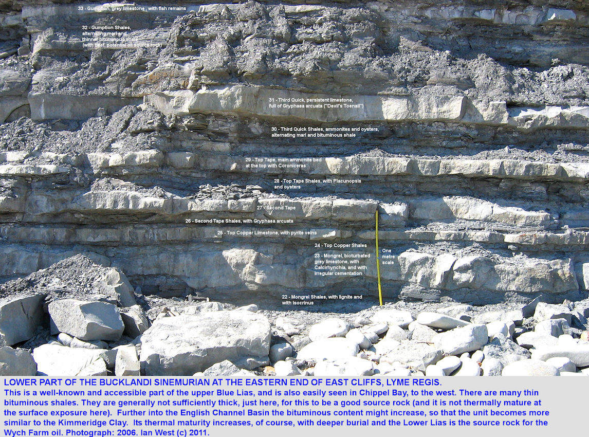 The lower part of the bucklandi Zone of the Sinemurian Blue Lias, eastern part of East Cliff, Lyme Regis, Dorset, 2006