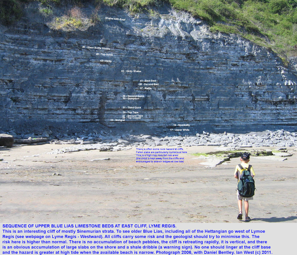 Labelled sequence for the mainly Sinemurian, upper part of the Blue Lias at East Cliff, Lyme Regis, Dorset, 2006