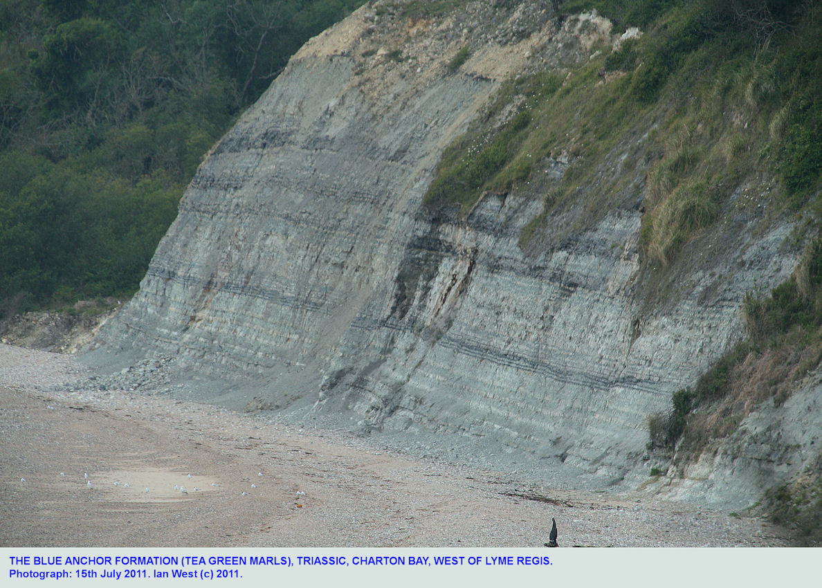 The Blue Anchor Formation, Triassic, at Charton Bay, East Devon, west of Lyme Regis, Dorset, July 2011