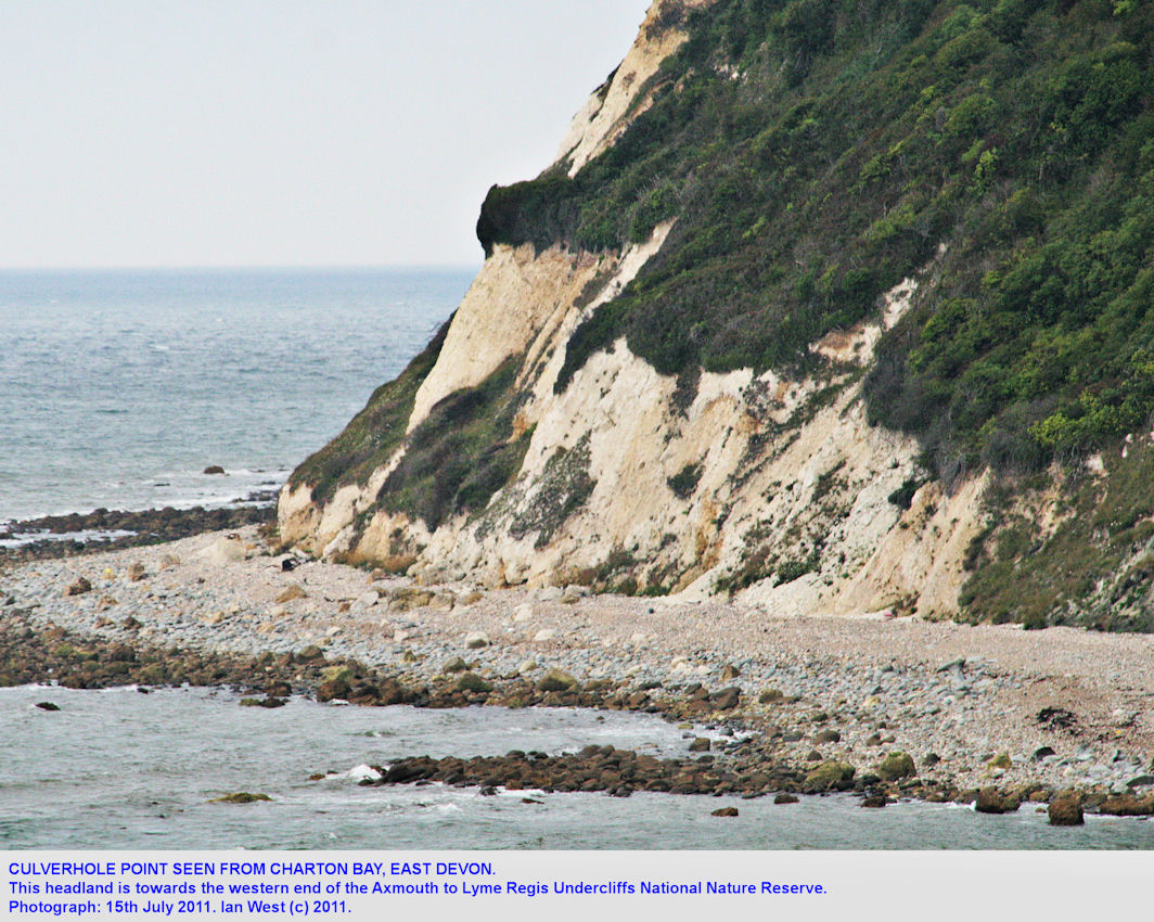 Culverhole Point seen from Charton Bay, Axmouth to Lyme Regis Undercliffs, East Devon, looking west, July 2011