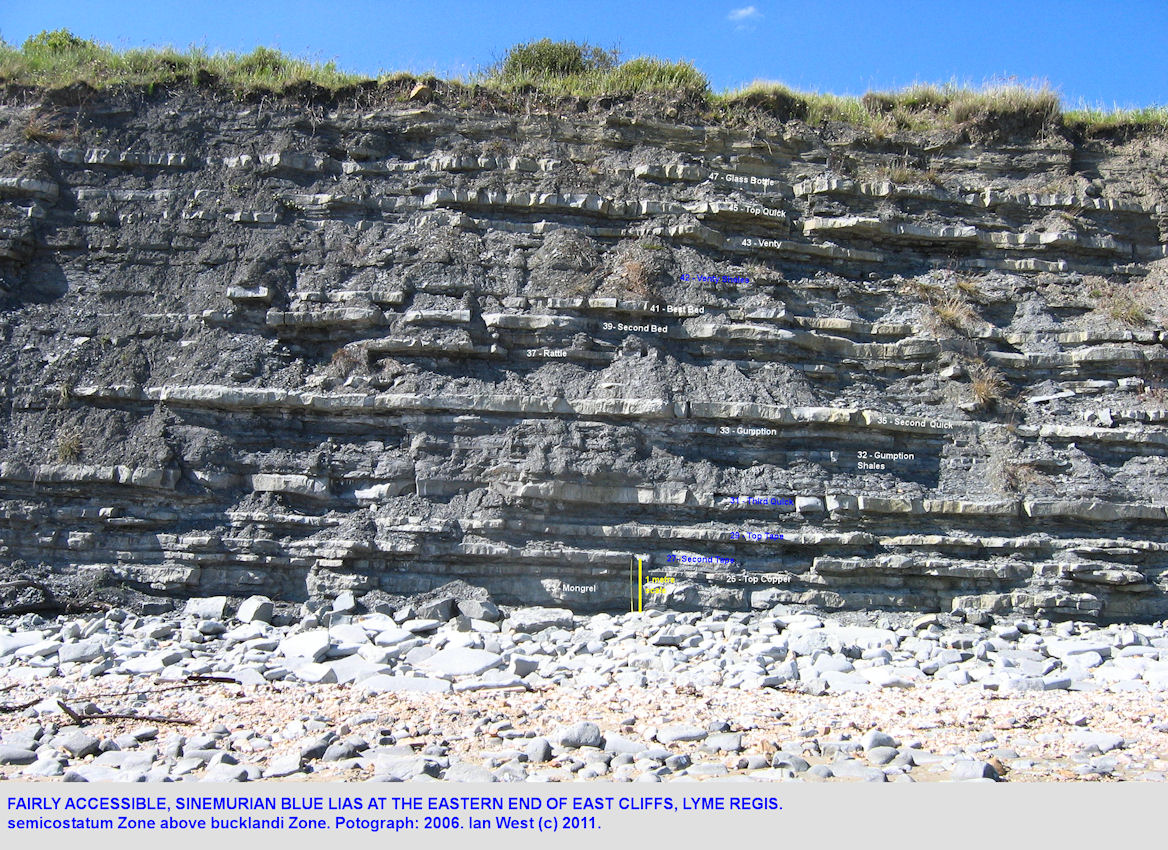 The sequence of Blue Lias limestones and shales at East Cliff, Lyme Regis, Dorset, in 2006