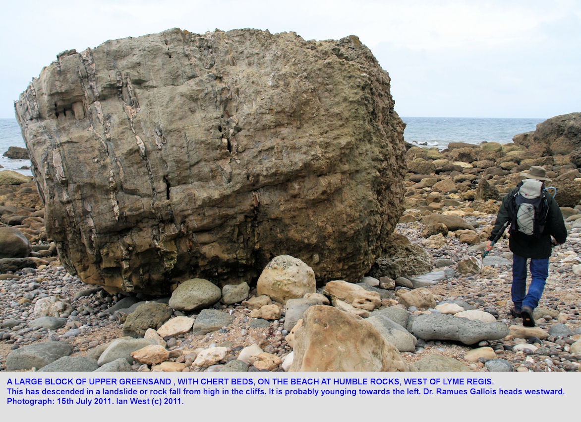 A very large block of Upper Greensand, Humble Rocks, Humble Point, west of Lyme Regis, July 2011