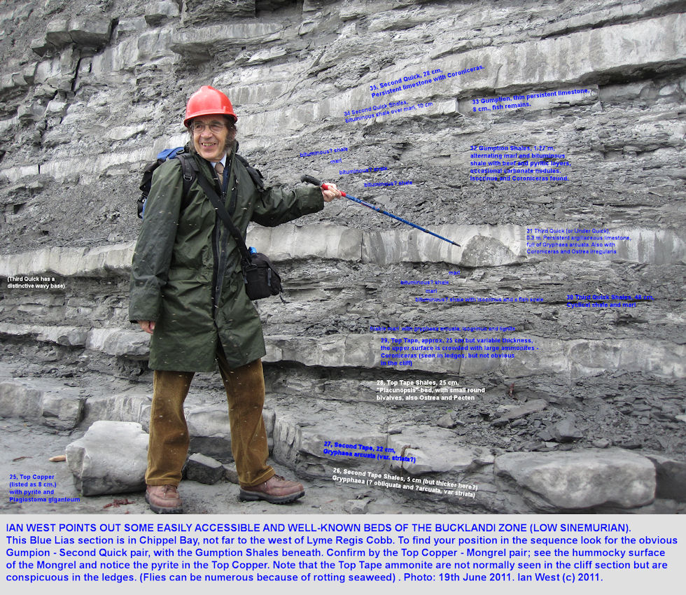 Ian West discusses individual beds of argillaceous limestone in the Bucklandi Zone, lower Sinemurian, Blue Lias, Chippel Bay, Lyme Regis, Dorset, 2011