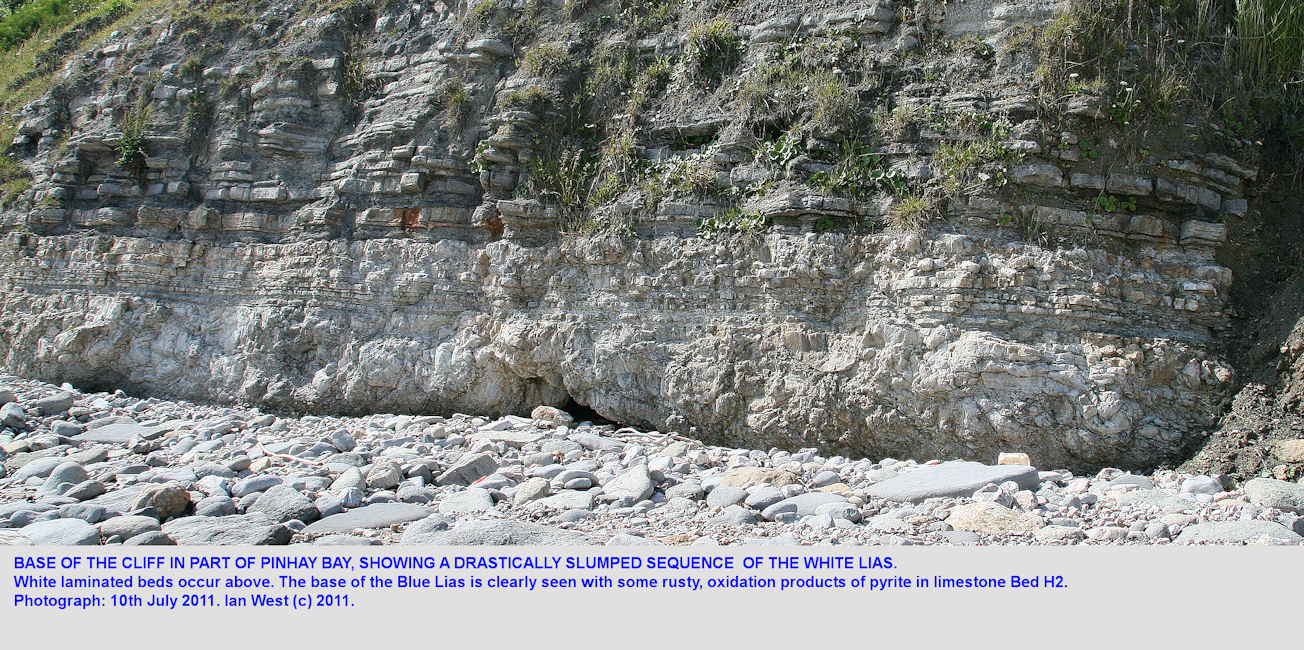 A stretch of cliff in Pinhay Bay, showing the upper part of the White Lias, with much of it greatly slumped, June 2011