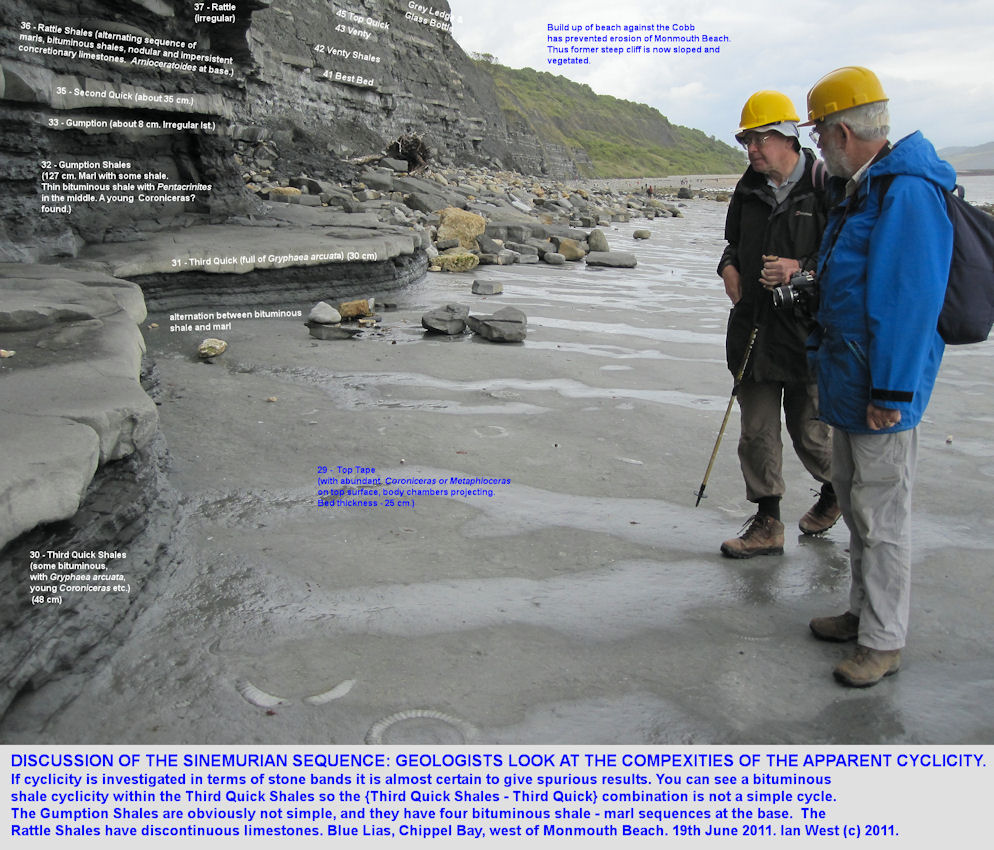 Cyclicity of the Blue Lias - discussion of the Third Quick and Third Quick Shales, Chippel Bay, Lyme Regis, Dorset, 2011