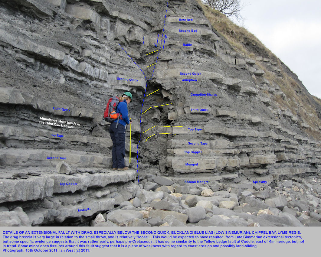 The Chippel Bay Fault, with a drag breccia, bucklandi Blue Lias, Chippel Lyme Regis, Dorset, 2011