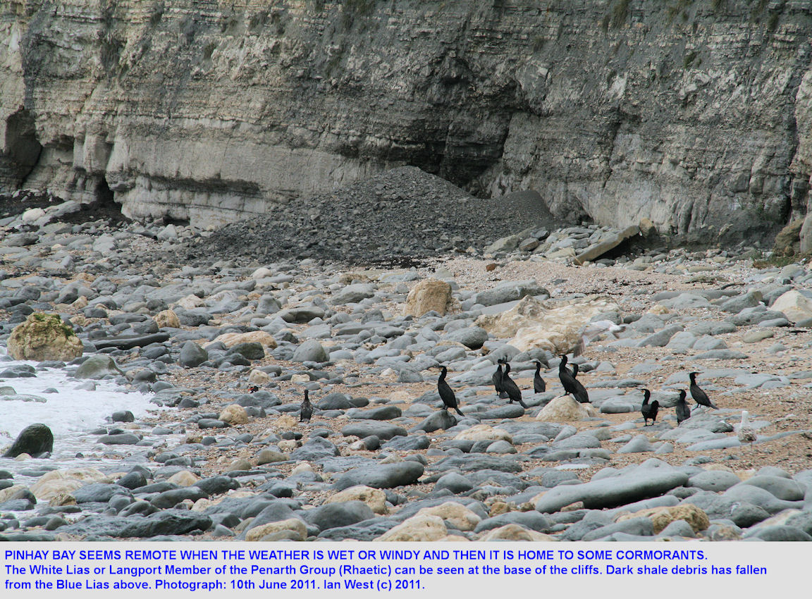 Cormorants in Pinhay Bay, west of Lyme Regis