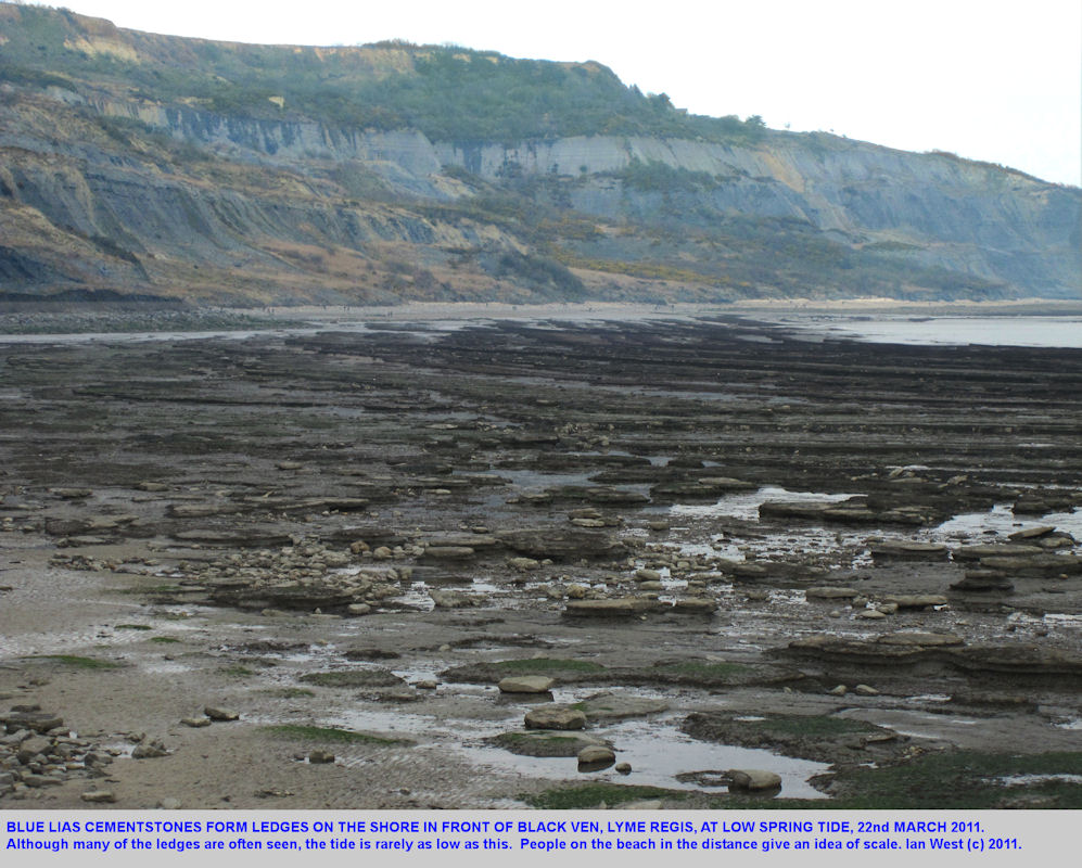 Reefs formed by cementstones in the Blue Lias, close to Black Ven, Lyme Regis, Dorset, low spring tide, March 2011