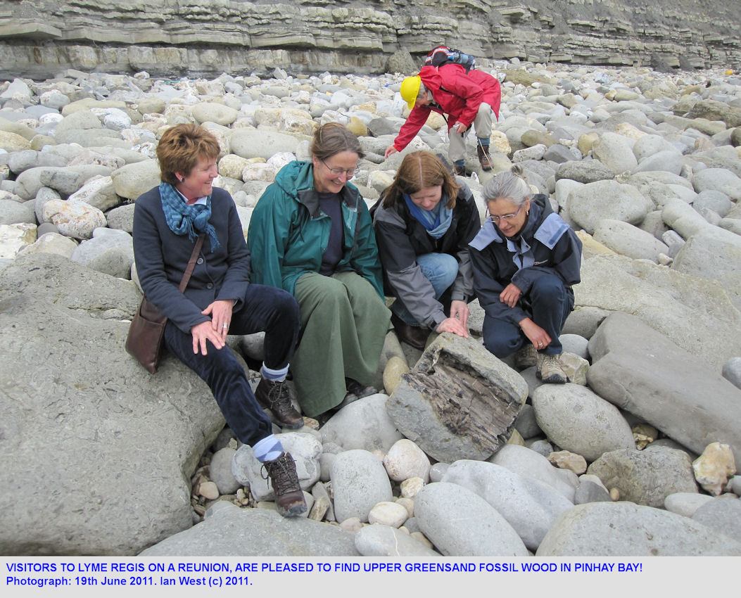 Visitors to Lyme Regis on a reunion find fossil wood in the Upper Greensands, 2011