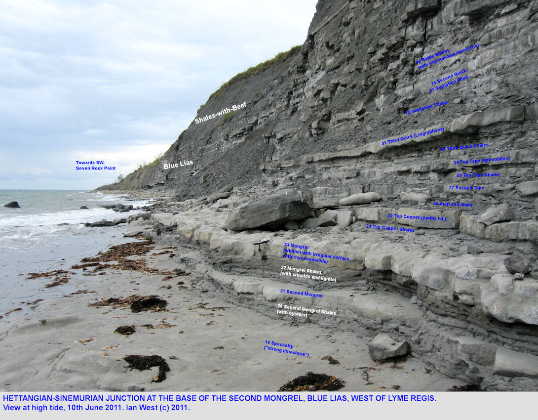 The Hettangian-Sinemurian boundary at the Second Mongrel, at Ware Cliffs west of  Lyme Regis, Dorset, 2011