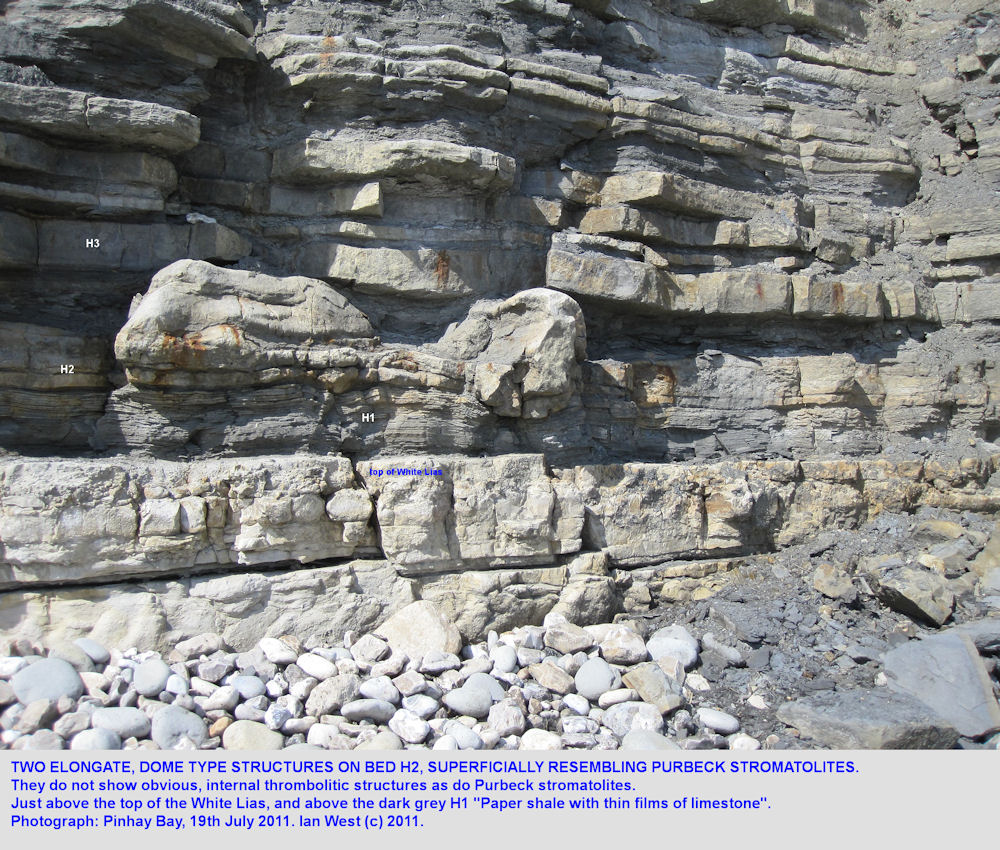 Two elongate, dome-like structures extending up from H2 into H3, near the base of the Blue Lias, Pinhay Bay, west of Lyme Regis, 2011