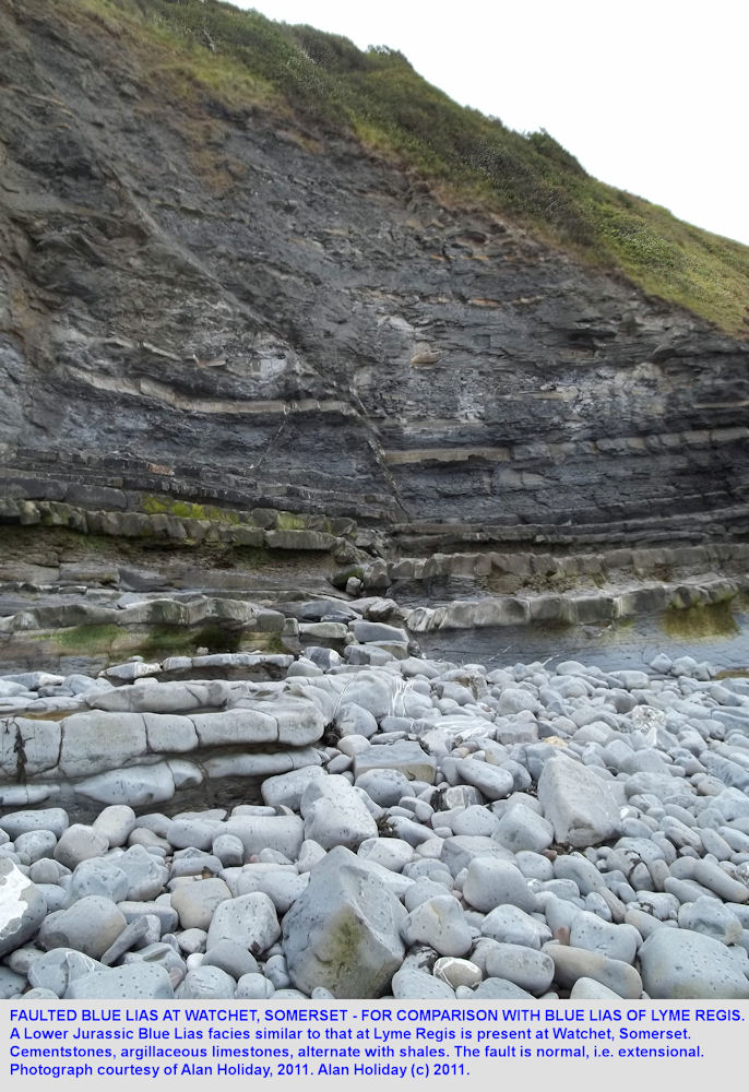 Faulted Blue Lias at Watchet, Somerset, 2011
