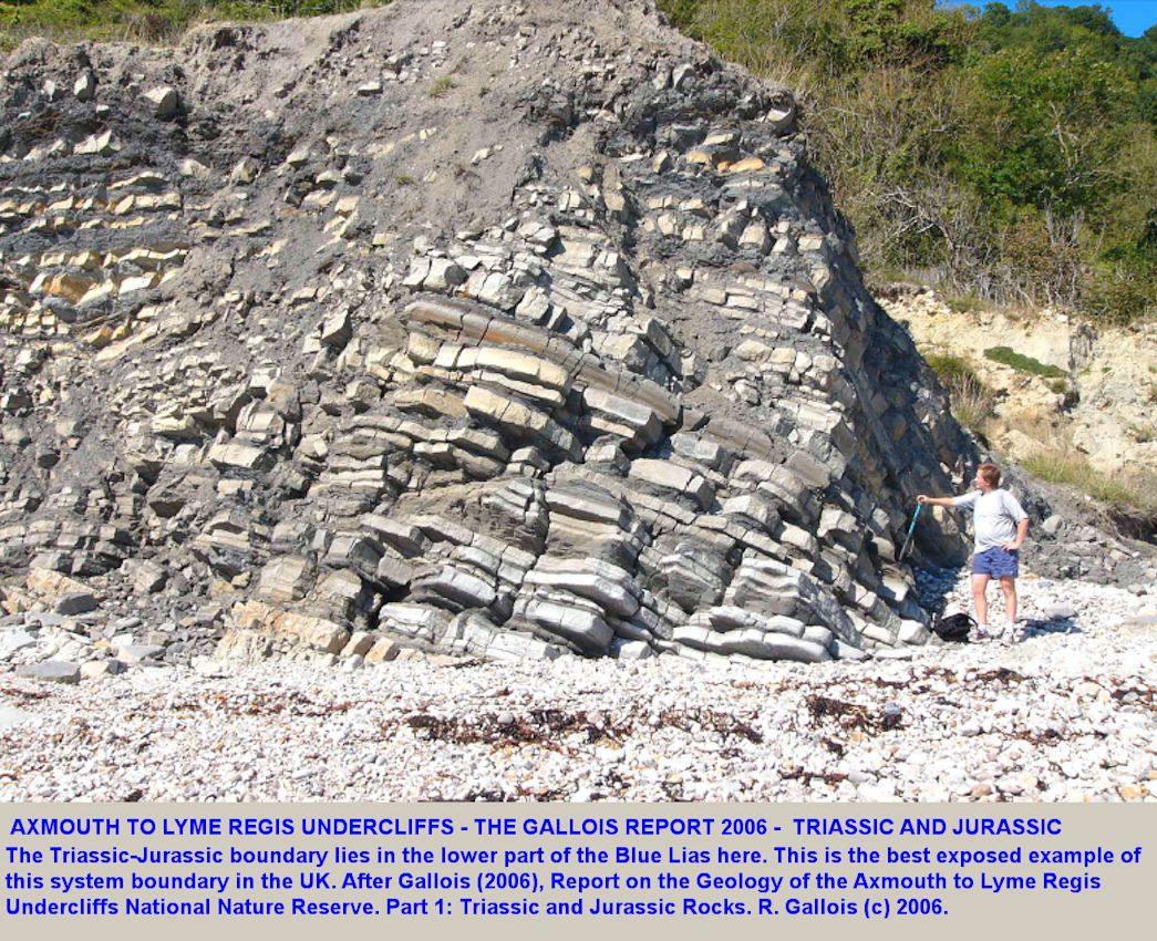 Front cover image from the Gallois Report of the Triassic and Jurassic Rocks of the Axmouth-Lyme Regis National Nature Reserve, 2006