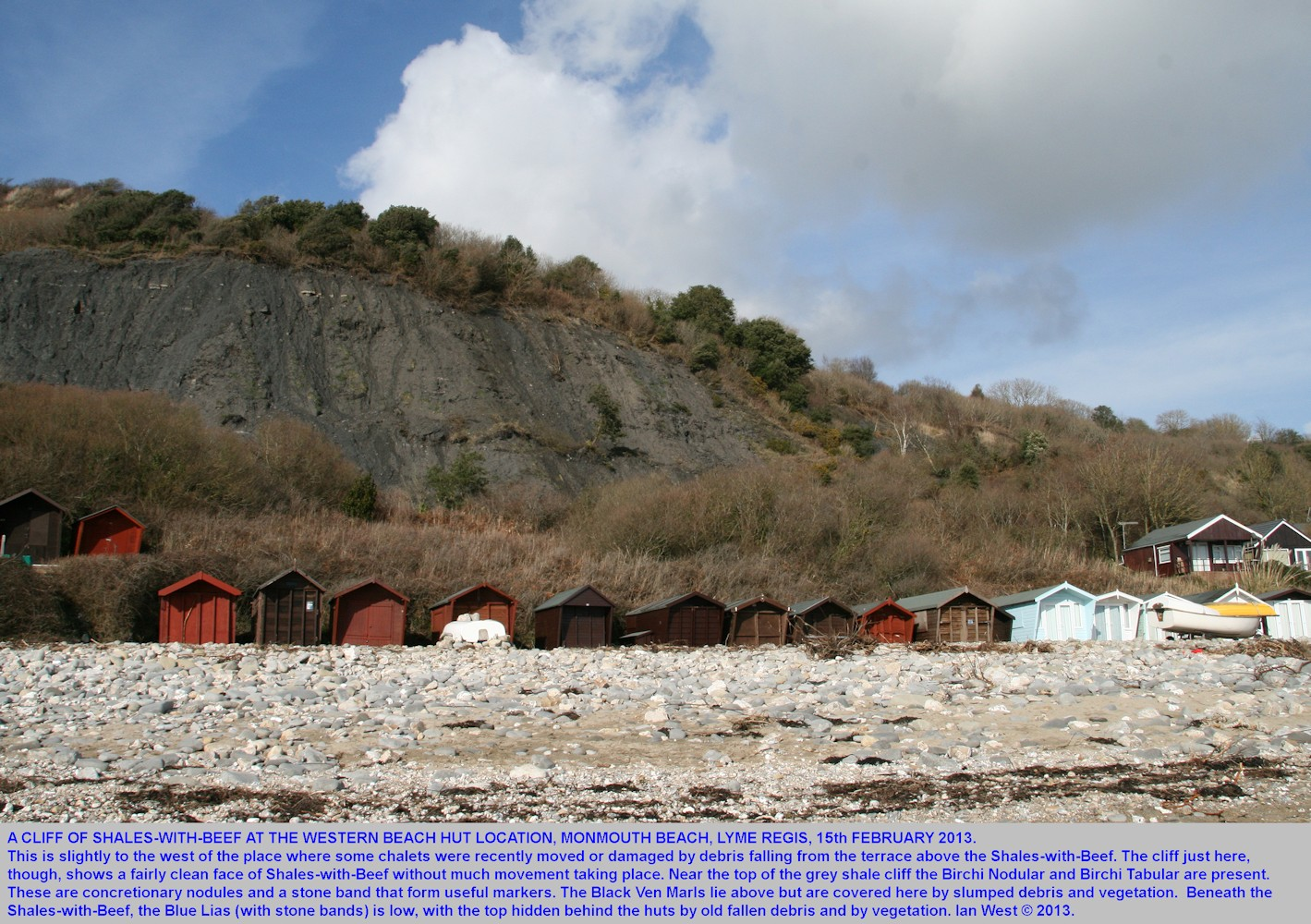 Relatively stable cliff of Shales-with-Beef at the beach huts, Monmouth Beach, Lyme Regis, Dorset, February 2013