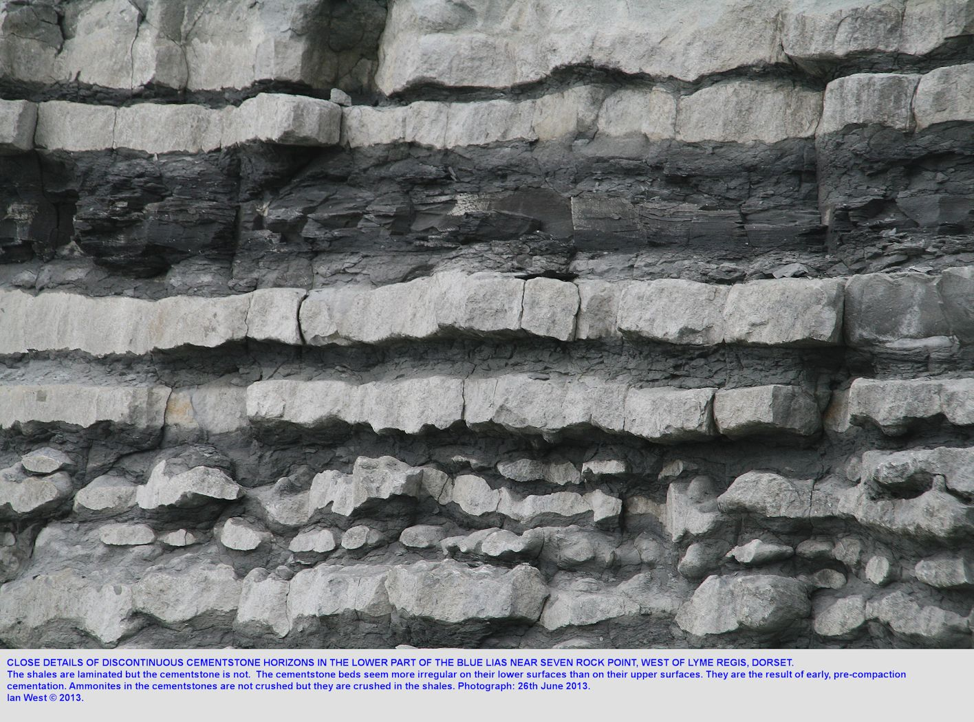A close-up view of cementstone bands in the Brick Ledge vicinity, Blue Lias, Lyme Regis, Dorset, 26th June 2013