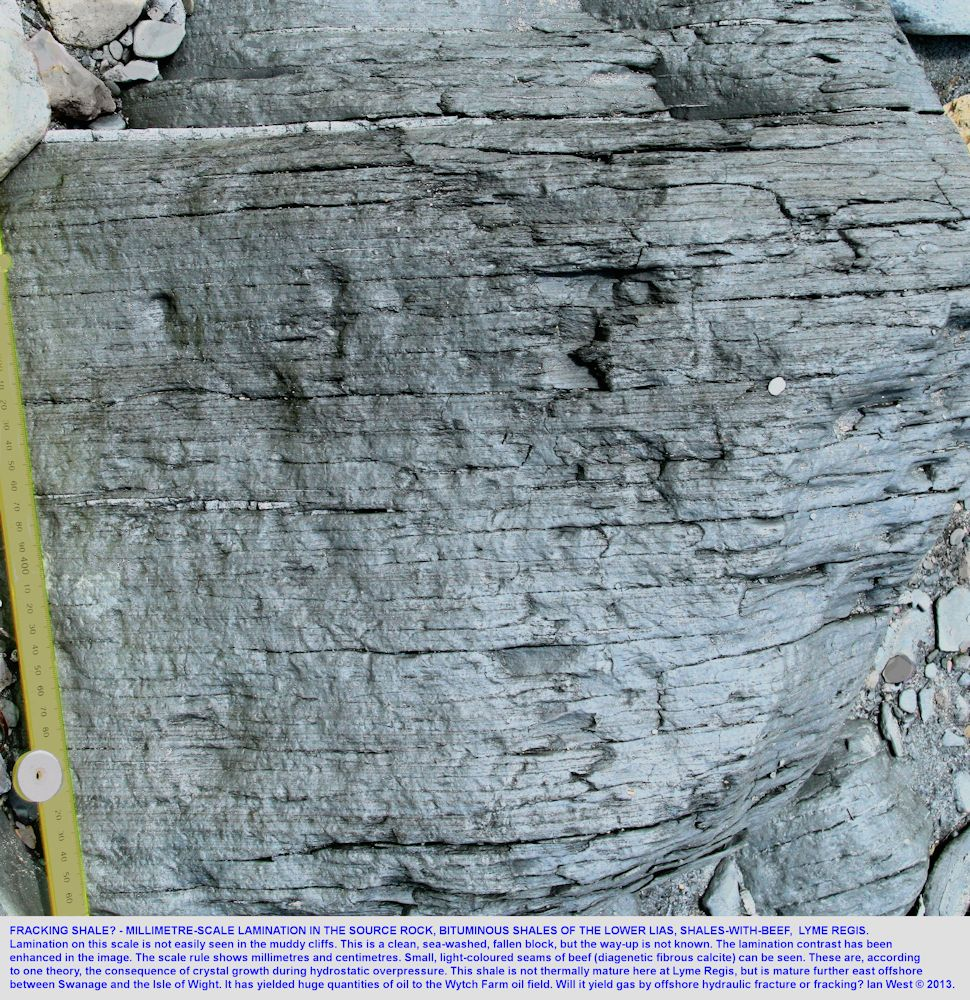Millimetre scale lamination in laminites or  bituminous shale, source rocks, the Shales-with-Beef, Lower Lias, Lyme Regis, Dorset