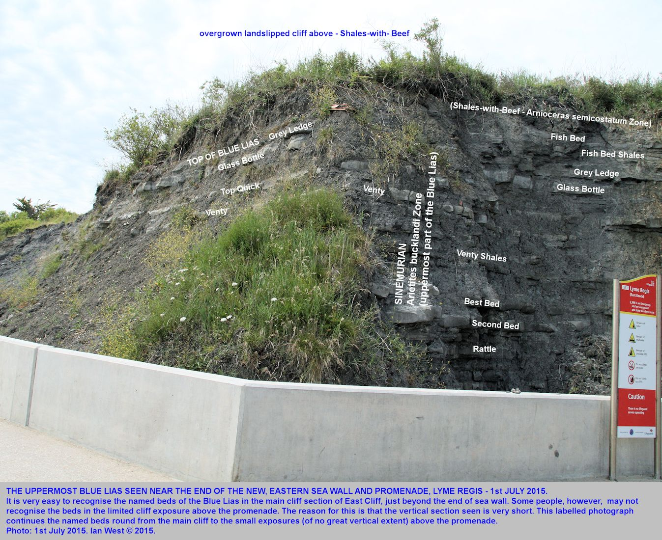 The far northeastern end of the new sea wall, Church Cliffs to East Cliff, Lyme Regis, Dorset, showing named of uppermost Blue Lias, 1st July 2015