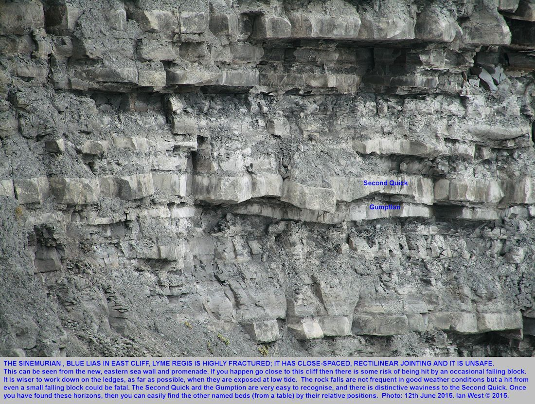 A closer view of the Second Quick and the Gumption and associated Sinemurian strata, Blue Lias, East Cliff, Lyme Regis, Dorset, 12th June 2015