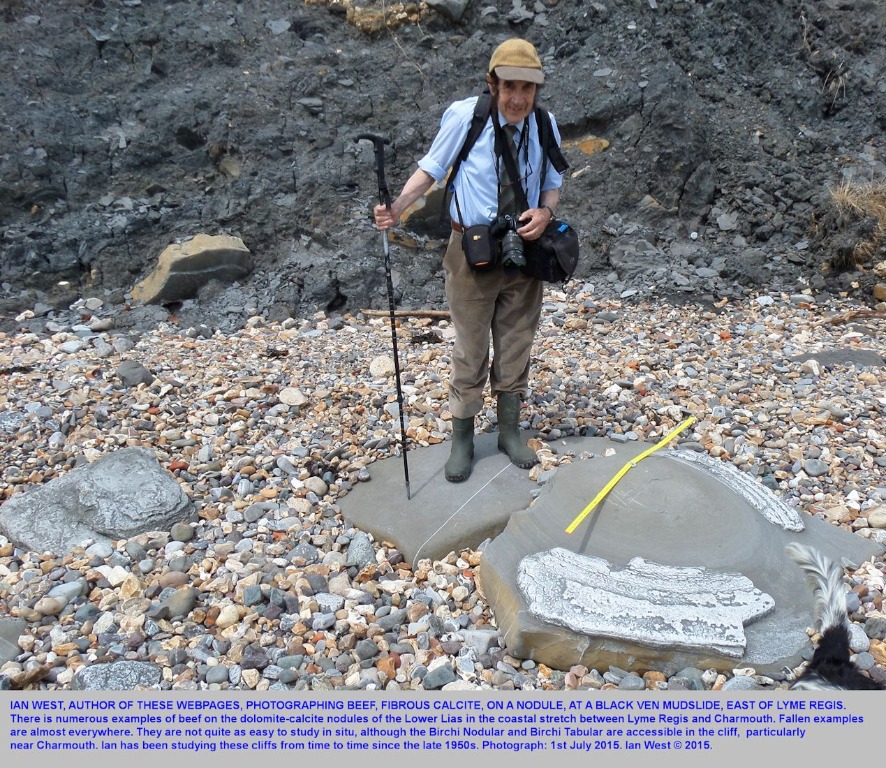 Ian West on the beach at Black Ven, near Lyme Regis, Dorset, photographing beef on a Liassic carbonate nodule, June 2015