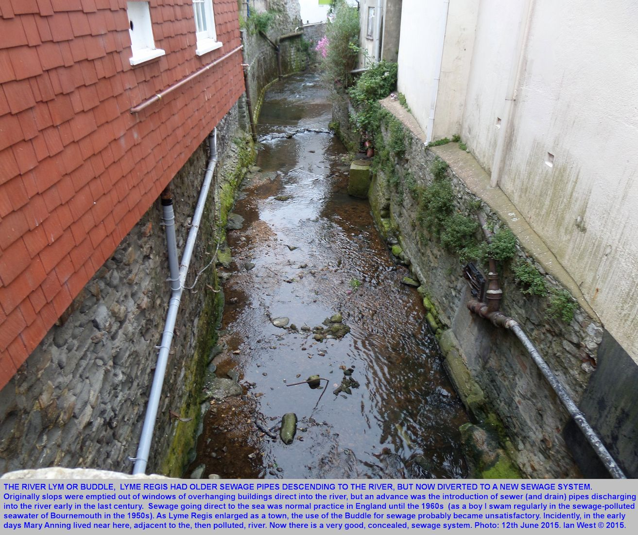 The River Lym at Lyme Regis, or Buddle, now a clean stream, but once, to some extent, an open sewer, photograph June 2015