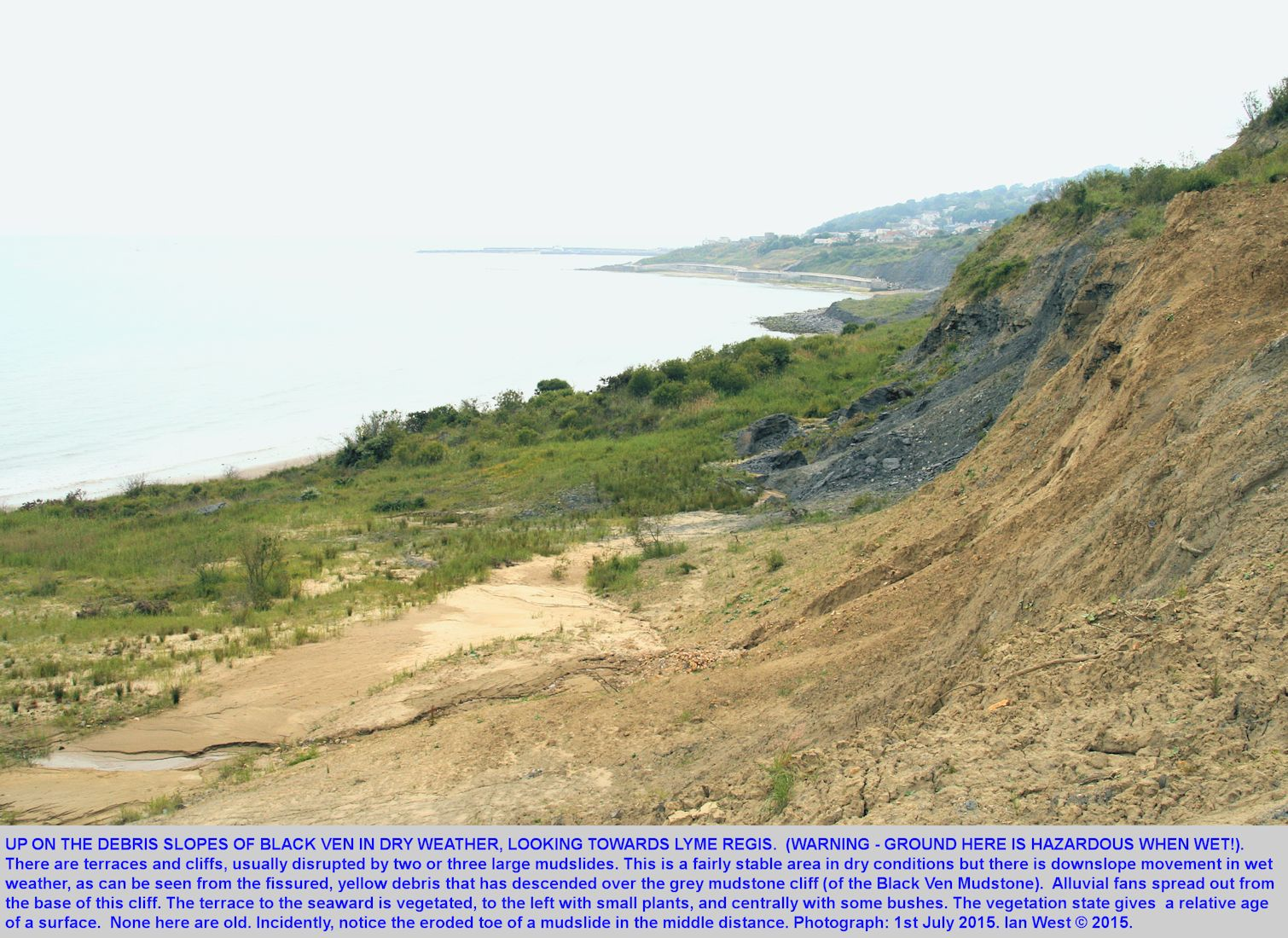 On the Black Ven Marl cliff and associated terraces of the Black Ven landslide and mudslide complex, about half-way between Lyme Regis and Charmouth, Dorset, 1st June 2015